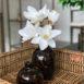 Lemonde Tortishell Tall Bud Vase